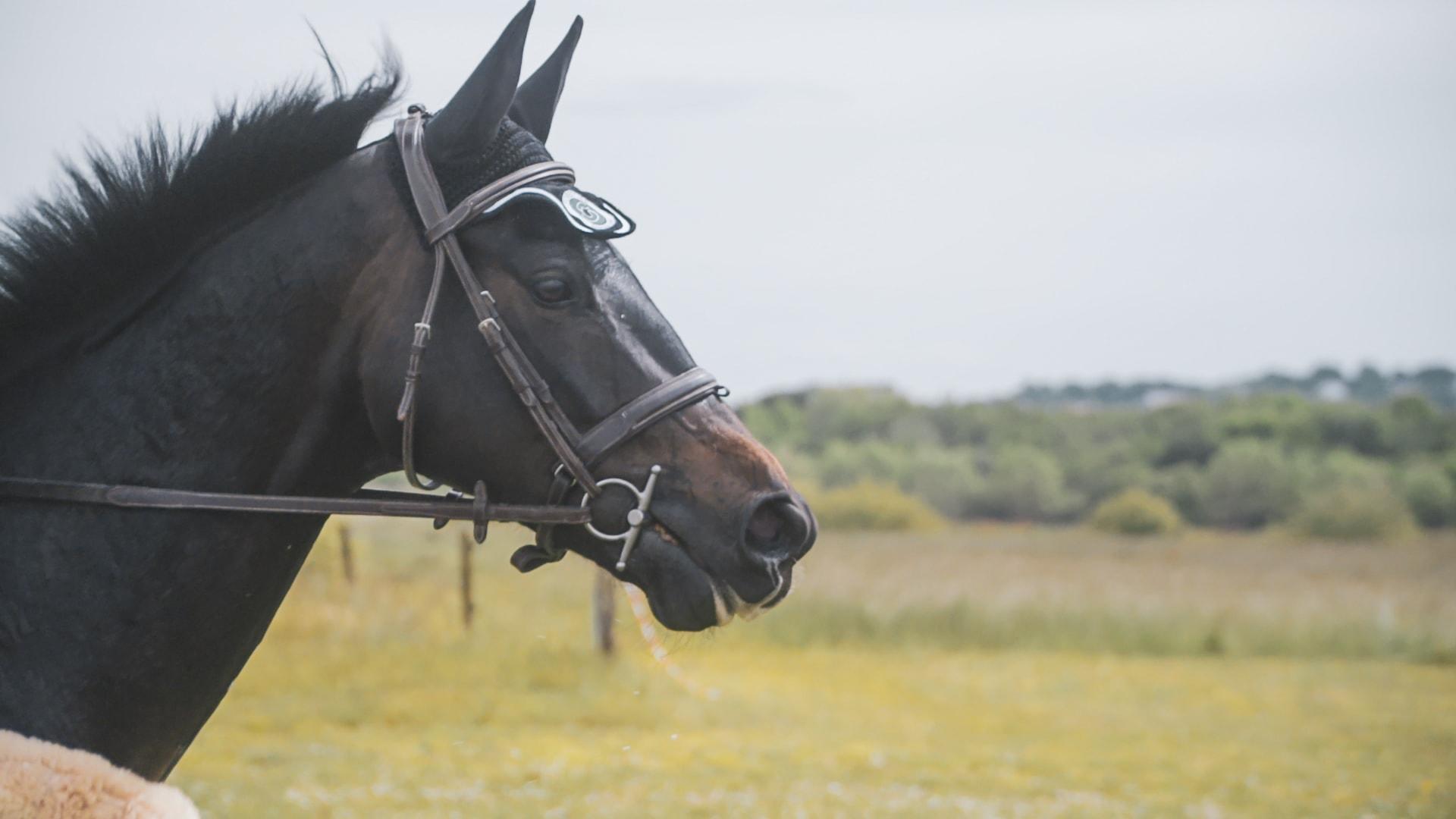 L'importance de la selle pour le bien-être du cheval